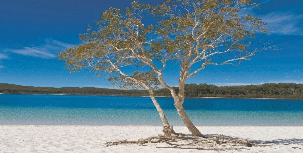 Lake Mckenzie Five Top Reasons To Visit01 1024x519
