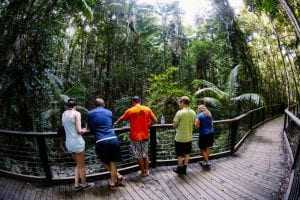 Blog Central Station Rainforest Connect With Nature On Fraser Island
