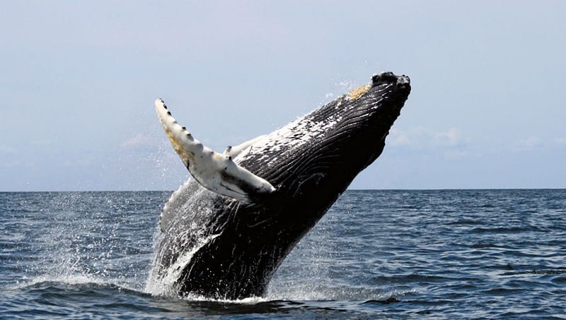 Whale Watching On Fraser Island01
