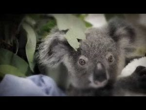 Visit Australia Zoo From Noosa 5 Little Known Facts About Australias Most Famous Zoo Dropbear Adventures Fraser Island 4wd Self Drive Hire Amp Camping Tours