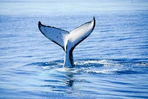 Fraser Island Tours Whale Watching Tour 4